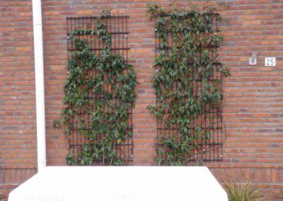 Panelen dubbel staafmat bevestigd aan muur tbv begroeiing.